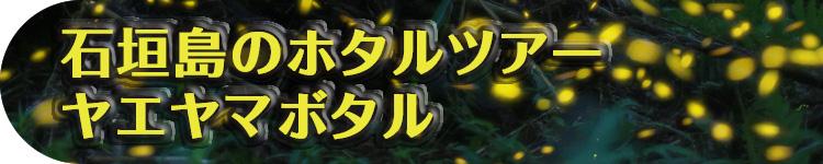 石垣島のホタルツアー・ヤエヤマボタル